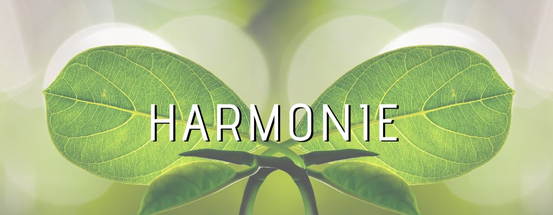 Harmonie Heilung ThetaHealing